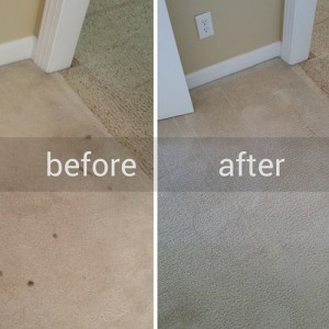 Pet Stains Carpet Before & After