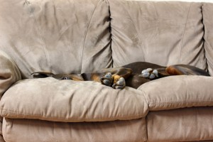 carpet stains and pet odor removal